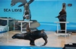 Catch Mote Marine's Sea Lions Before They Swim Away