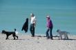 Every Dog Has A Beach